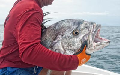 Biiig fish!