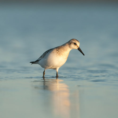 sanderlingsquare