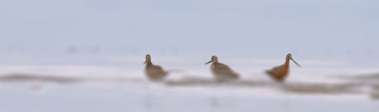 Shorebirds – The movie